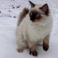 Apollo loving the snow