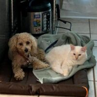 Kitten and Lennys darling dog